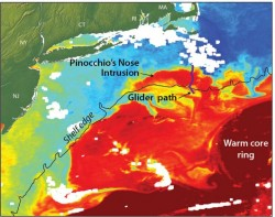 "Satellite imagery shows the exchange of warm core ring water (red) with the colder continental shelf waters (blue). Satellite imagery, however, could not help scientists determine the underlying process for the warm water intrusion; instead they used data from ocean robots or ""gliders"" recently installed off the coast of Massachusetts. The scientists have dubbed the events ""Pinocchio's Nose Intrusions"" (PNI) because the warm intruding water continues to 'grow' for hundreds of miles, moving in the opposite direction from the northward movement of the Gulf Stream. (Illustration by Jack Cook, Woods Hole Oceanographic Institution)"