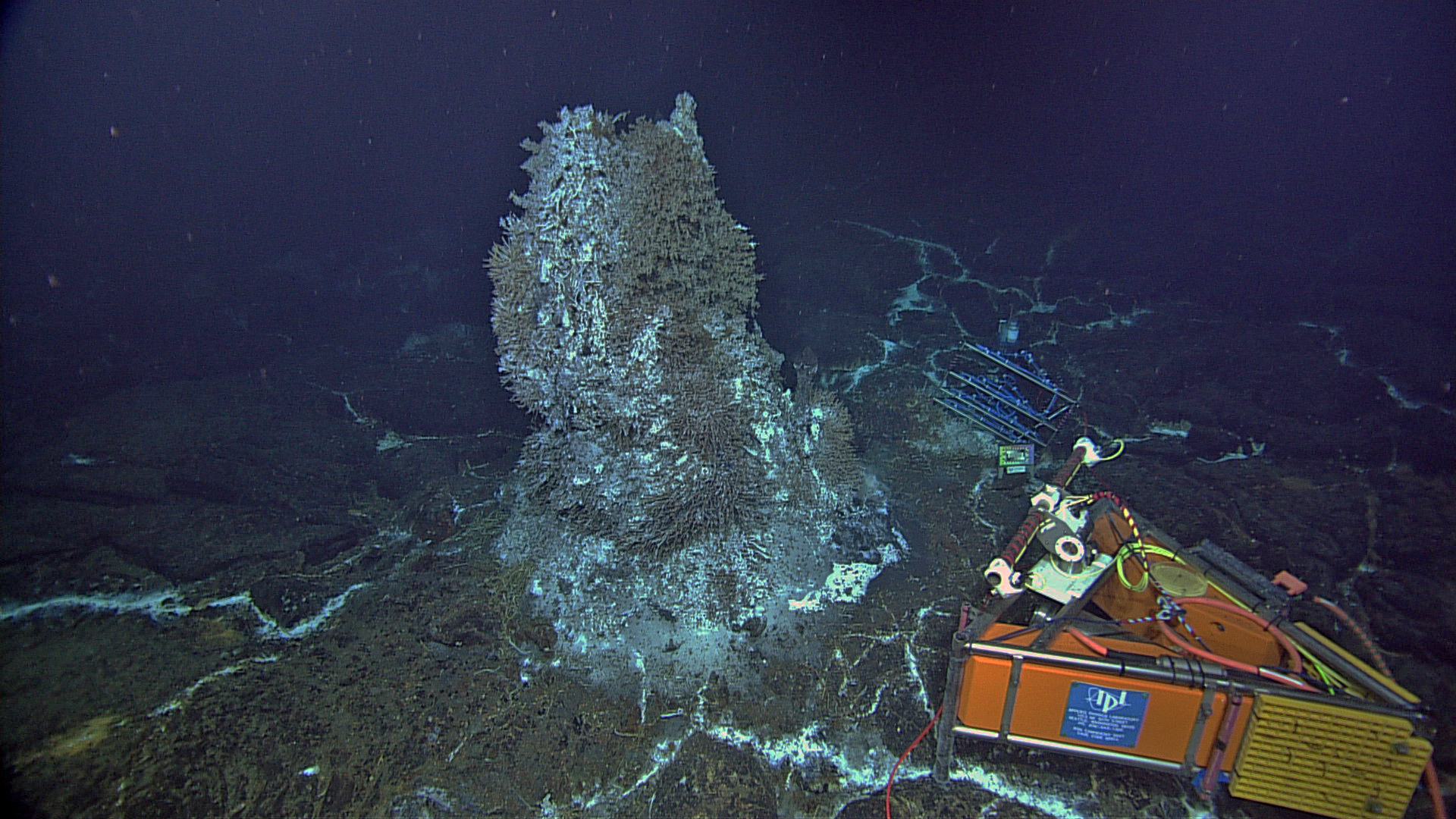 Photo Credit: NSF-OOI/UW/CSSF; Dive R1730; V14