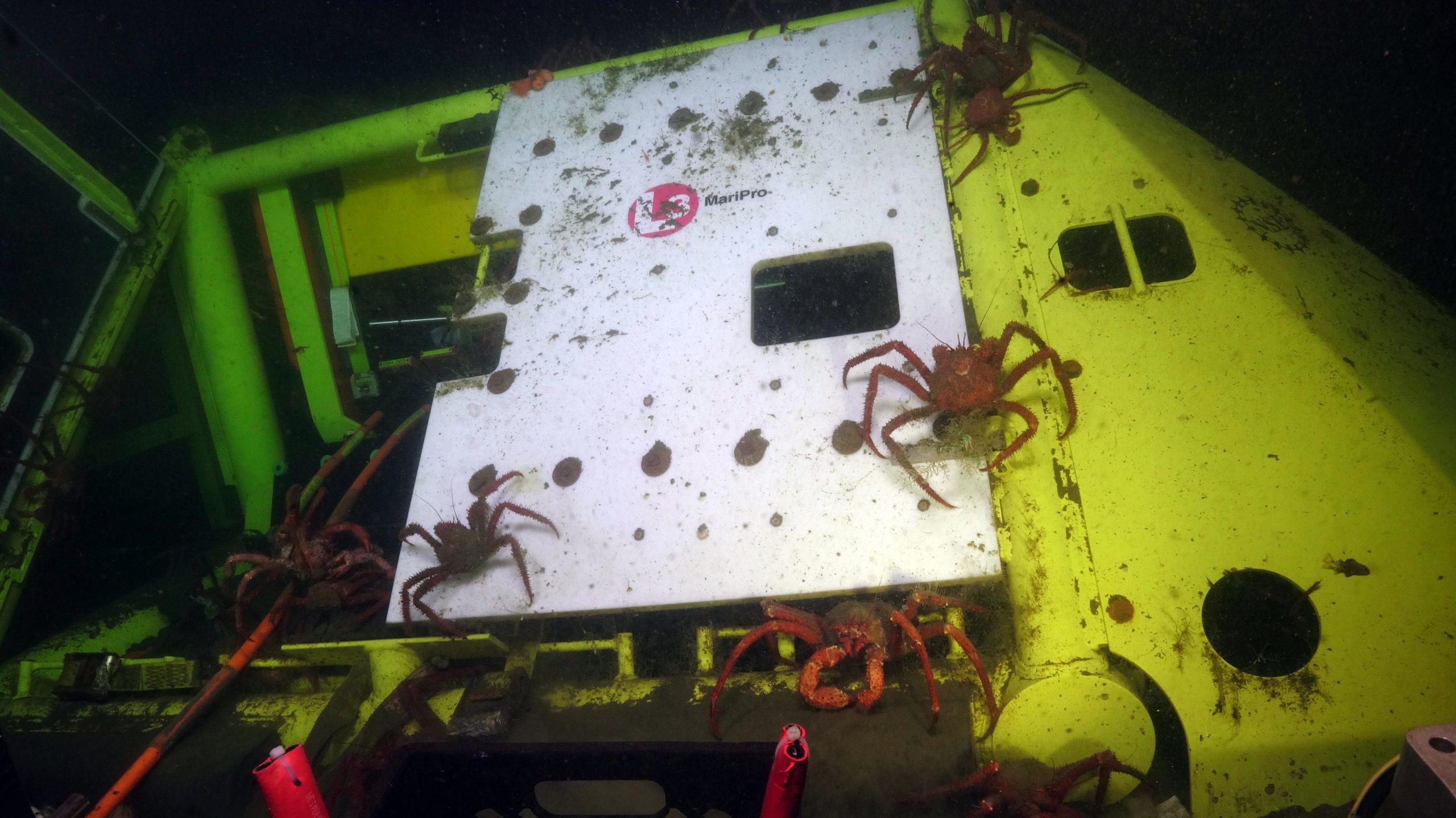 News_Crabs
